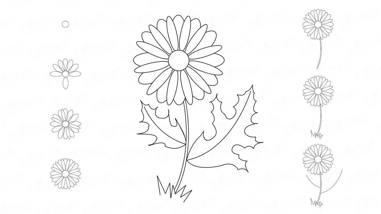 How to draw a daisy in stages