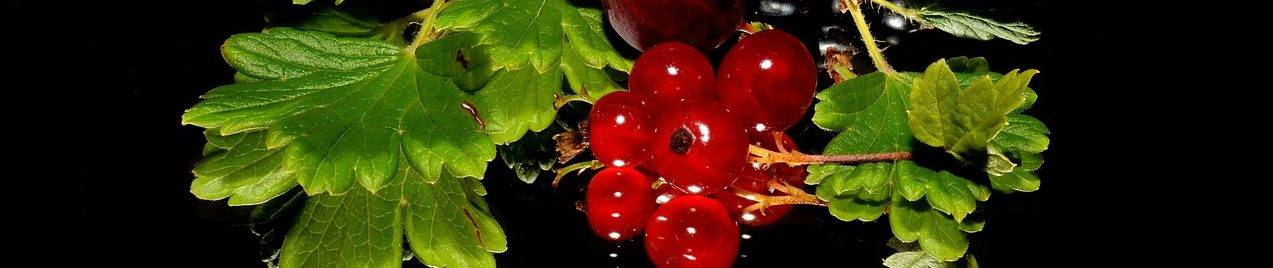 red-currant-179119_1280