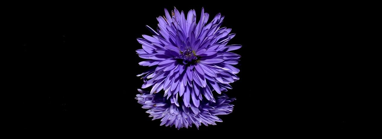 aster-188045_1280